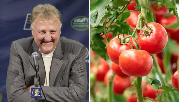 Larry Bird a fait le buzz pvrcequ'il ressemble à une tomate