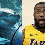 NBA – 5 achats/dépenses parmi les plus dingues des joueurs