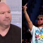 UFC – Dana White humilie encore Jake Paul… et tape là où ça fait mal !