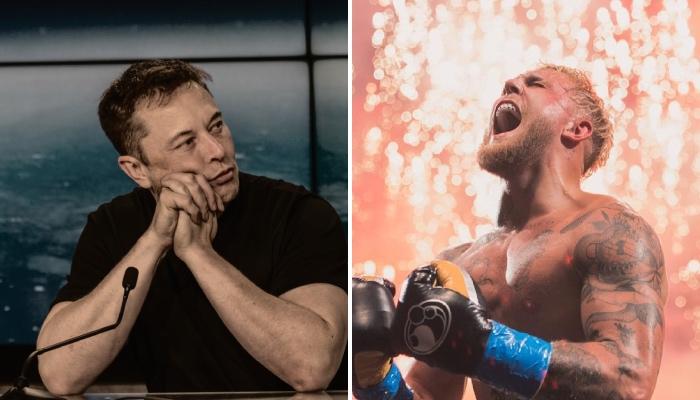 Le milliardaire américain Elon Musk, mains jointes, observe le YouTubeur et apprenti boxeur Jake Paul