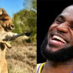 NBA – Le surprenant joueur actuel qui élève des zèbres et des kangourous sur son temps libre
